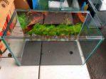 Aquarium Kaca Mini untuk Kura-kura Ukuran 40 x 20 x 25 cm