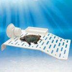 Basking Kura-kura untuk Area Daratan di Aquarium