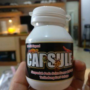 1 Botol Capsule Plus Reptile agar Kura-kura Anda Sehat Selalu